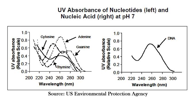 UV light absorbance graph